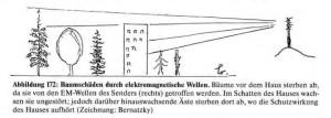 Bernatzky_Zeichnung_1994